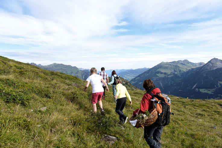 Wenn frühmorgens die Sonne über den Gipfeln aufgeht und der Tau auf den saftigen Alpwiesen perlt, ist die richtige Zeit für eine Kräuterwanderung. #silvrettamontafon #bergsommer #hiking