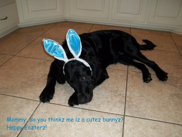 Easter Puppy! Wait, Easter puppy or bunny?