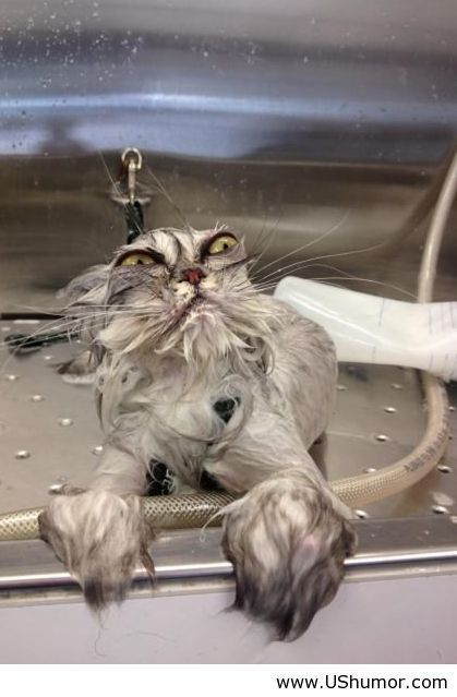 Bath cat US Humor - Funny pictures, Quotes, Pics, Photos, Images on imgfave