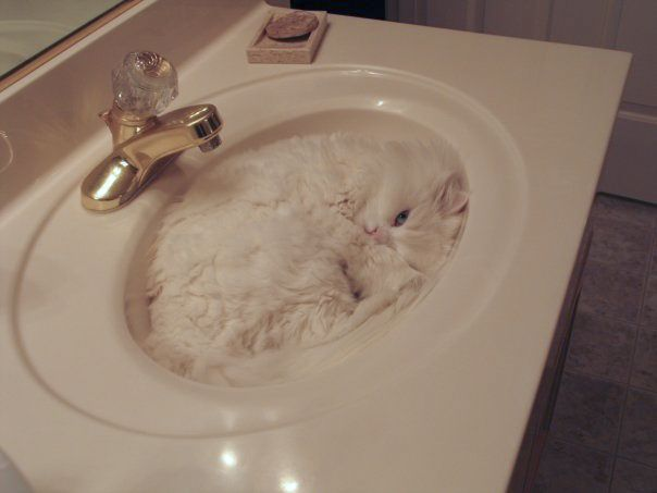 :) cats and their sleeping places