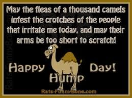 Nice Itu0027s HUMPDAY!!! Hump Day Camel
