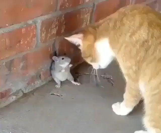 Hauskat Eläinvideot