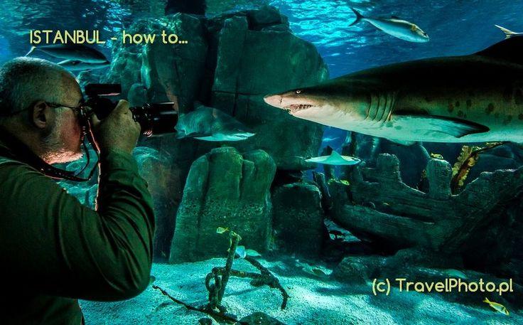 Turcja, Turkey - Istanbul, Stanbuł  #Istanbul  - Aquarium, keep smile it's only shark! - blog  http://malypodroznik.pl/swiat/turcja2014/tur14_blog00.htm