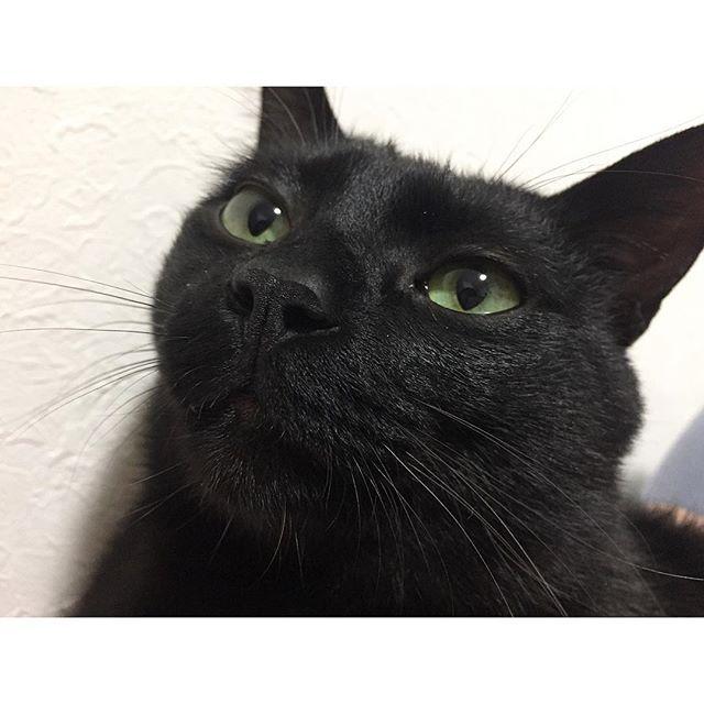 ✴︎ やっぱりクロちゃん鼻の穴大きめだよね…😹? ✴︎ #ねこ#猫#cat#catstagram #cute#くろねこ#blackcat #kurostagram #mew#ふわもこ部#黒猫#にゃんこ#元野良猫#愛猫#ねこあつめ#ねこ部#ニャンスタグラム#みんねこ#picneko#ピクネコ#ハンサム#animal#ねこ好き #ペコねこ部#ねこすたぐらむ