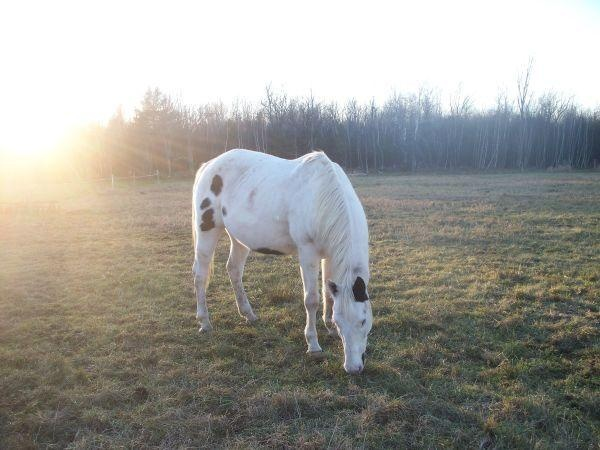 Paint Horse For Sale | White Mare For Sale
