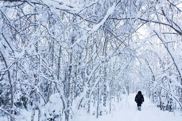 Snowy forest magic -Rovaniemi, Lapland, Finland