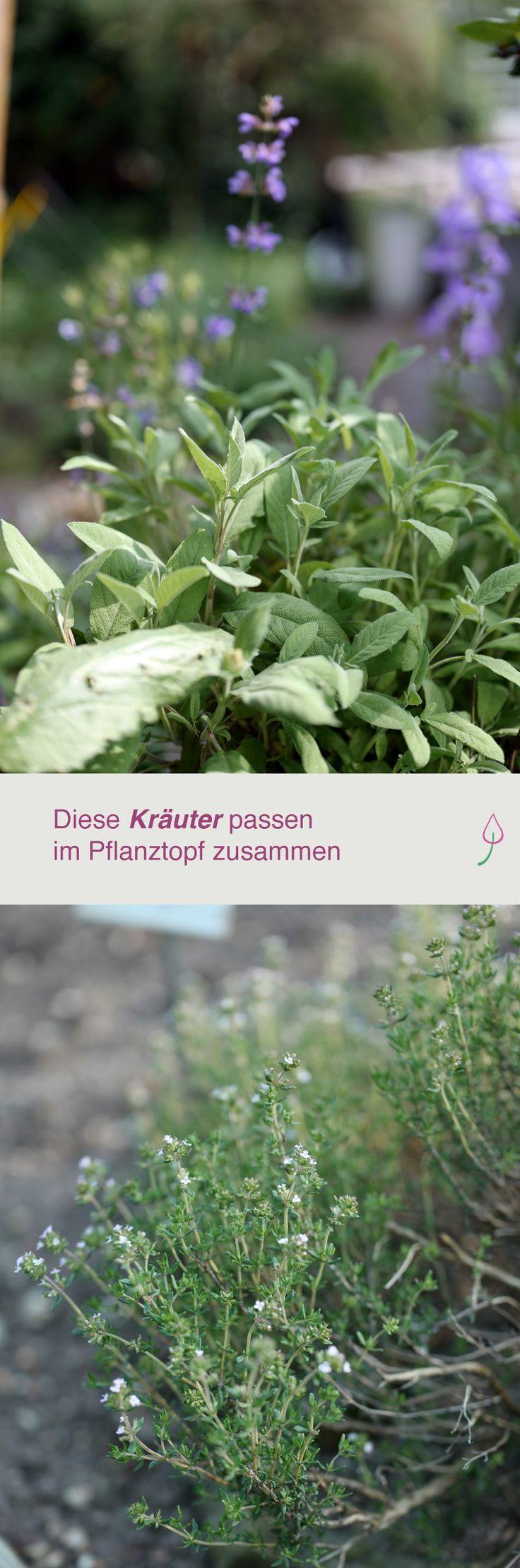 161 besten bildern zu nutzgarten: salat, kräuter, gemüse, obst auf, Gartengerate ideen