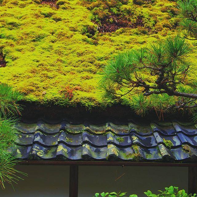 【miyonn23】さんのInstagramをピンしています。 《苔の貫禄!  #苔  #緑  #森  #日本  #自然  #散歩  #苔の屋根  #日本家屋  #moss  #wood  #japan  #woodworking  #nature  #japanese》
