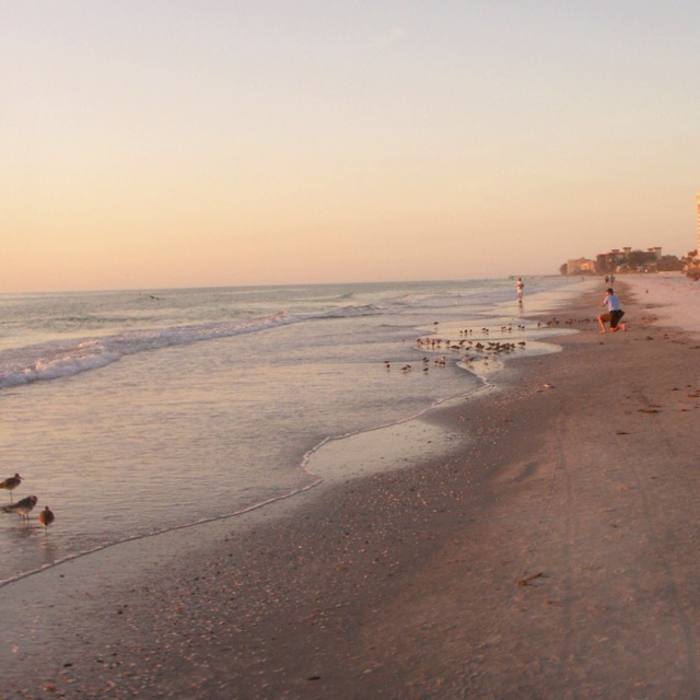 Indian Beach: Evening Walk, Indian Rocks Beach Florida