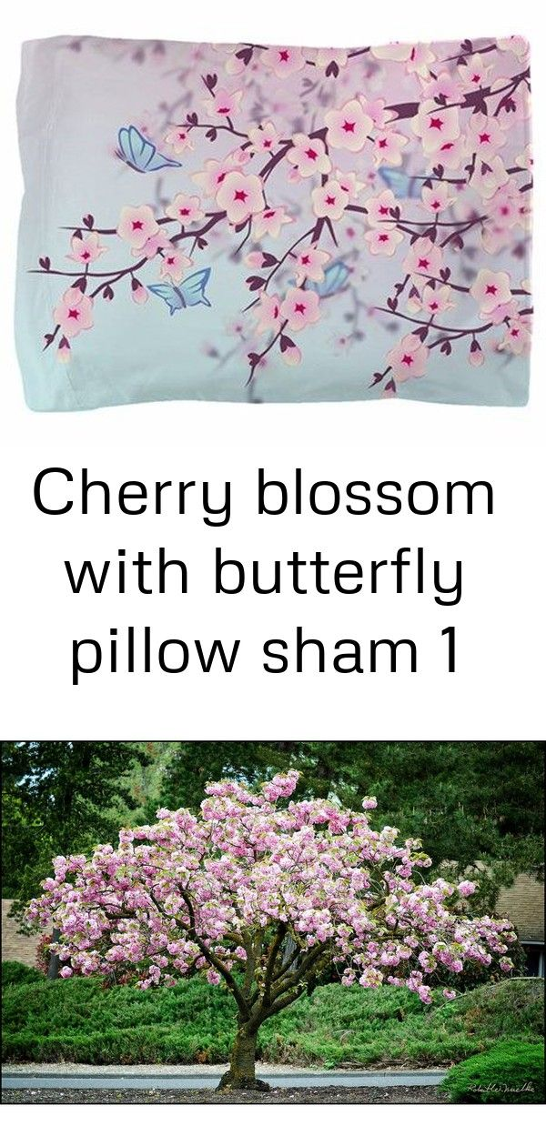 Cherry Blossom With Butterfly Pillow Sham Online Orchards Kwanzan Cherry Blossom Tree Bare Root Flch001 The Hom Butterfly Pillow Cherry Blossom Blossom Trees