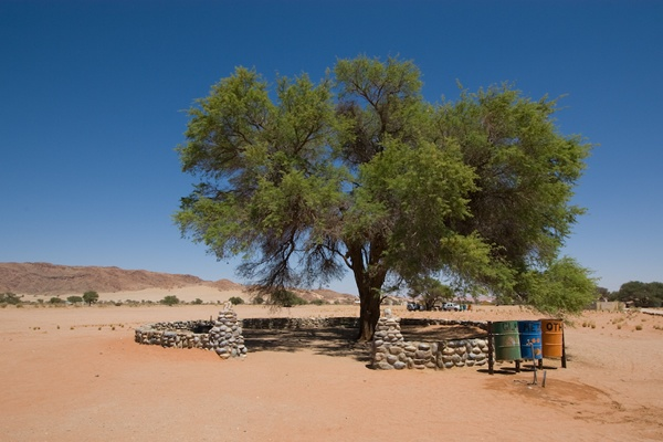 Sesriem: Campsite Under A Camethorn Tree