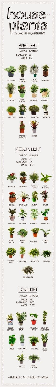 A visual guide to houseplants, according to their need for light. #Plant #Pot #Ideas