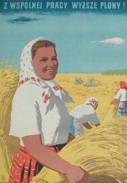 Jozef Korolkiewicz, 'Working together we get higher yields', 1954