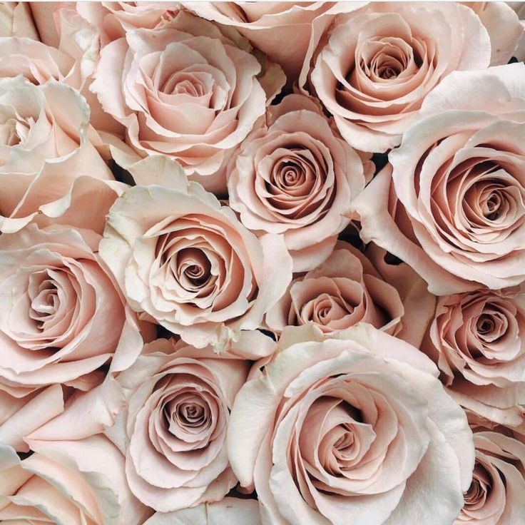 Show some love to @academyflorist who only have a couple hours left in their roses sale! Check out their post for the details! #locallove