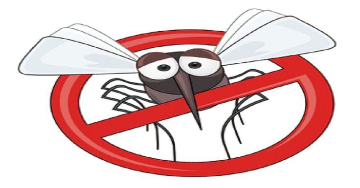 Febre amarela: saiba quais são os sintomas, transmissão e prevenção