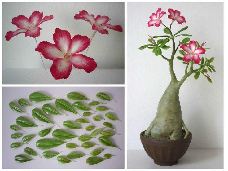 Adenium - sivatagi rózsa https://www.facebook.com/Csodavirag