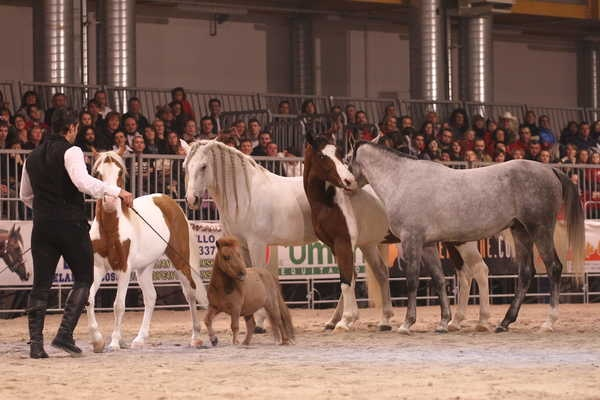 Country Christmas: l'evento internazionale Country Style di Pordenone Fiere.