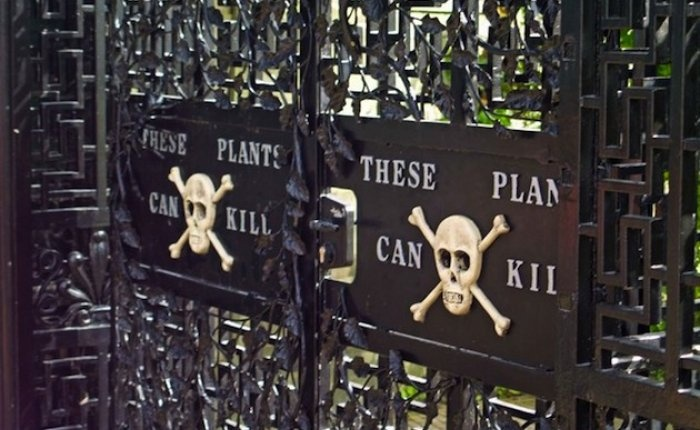 Poison Garden. Alnwick Garden in England features more than 4, 000 plant varieties including the fascinating Poison Garden full of killer plants.