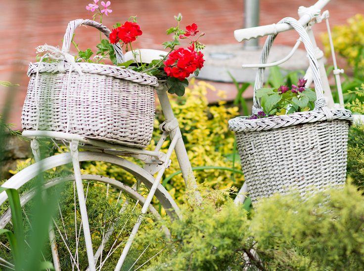 329 besten garten pflanzen bilder auf pinterest garten pflanzen artikel und balkon. Black Bedroom Furniture Sets. Home Design Ideas