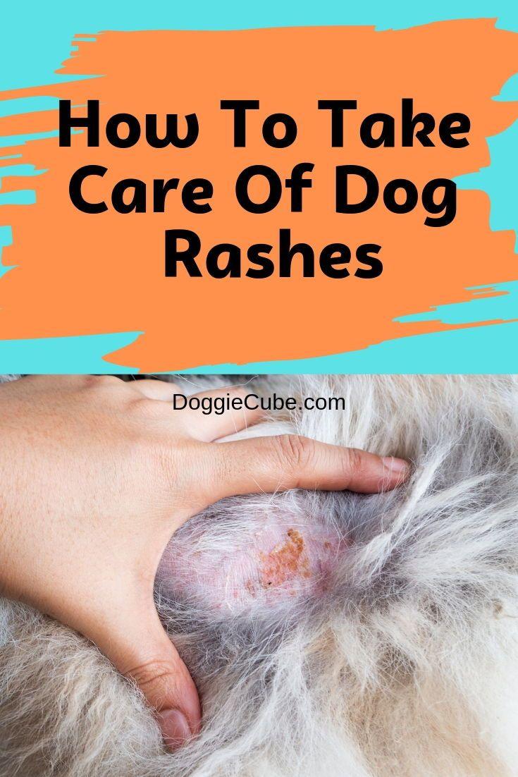 How To Take Care Of Dog Rashes Doggie Cube Dog Rash Dog Skin Care Dog Dry Skin