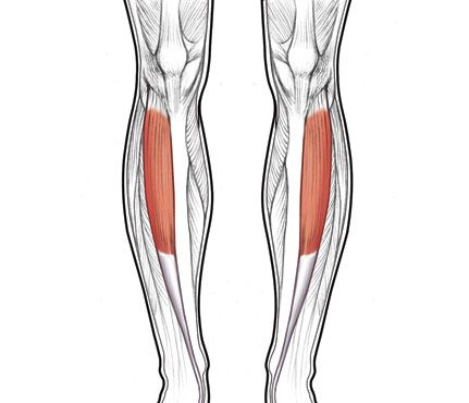 GORGEOUS LEGS    Target: ANTERIOR TIBIALIS    Why it works: That, folks, is geekspeak for shin, a body part you probably haven't given a whole lot of thought to. But strengthen these suckers and you'll create that sexy line of definition in your lower legs, says Wayne Westcott, Ph.D., an exercise physiologist at Quincy College. And, if you care, being strong is also pretty great for injury prevention—no shin splints or ankle rolling for you.