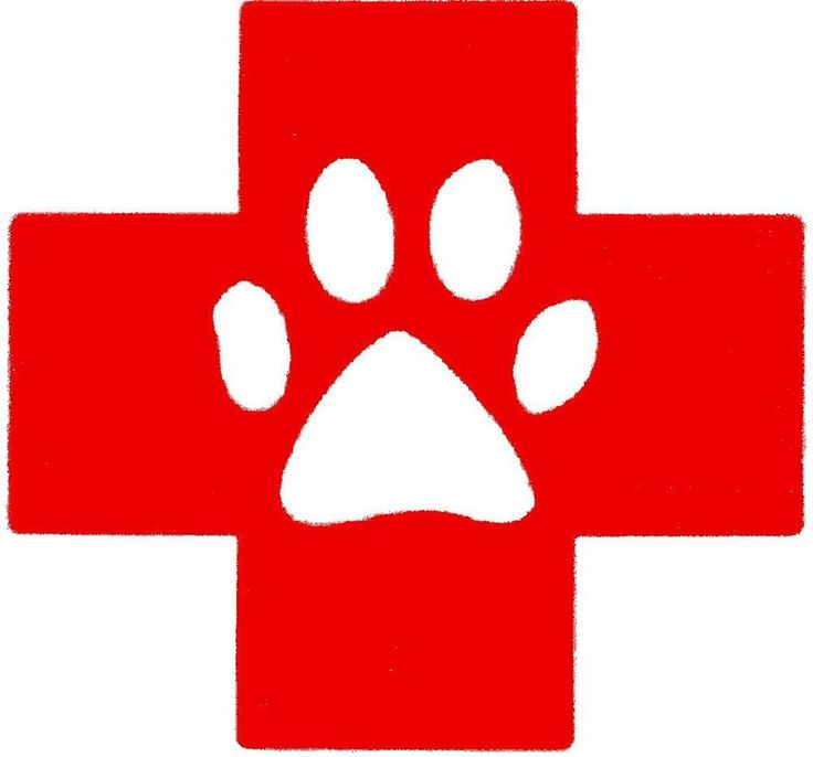 Training for CPR & First Aid for pets is being offered for pet owners and care takers.Haven't signed up yet? Class size is limited and there are still spots left! January 8th 1pm-5pm present by Health Quest at the Dutchess County SPCA Adoption and Education Center.