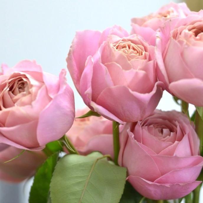 Pin On Garden Roses Flower Moxie