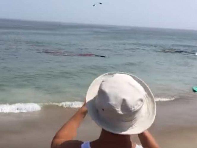 Video: Captan ataque de tiburón blanco a pocos metros de la playa