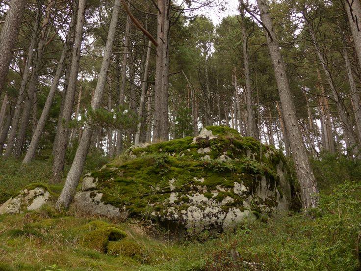 Camí de les Pardines. Encamp. Andorra