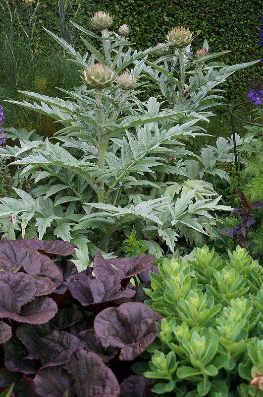Ligularia 'Britt Marie Crawford', Hylotelephium, Artichoke | Flickr - Photo Sharing!