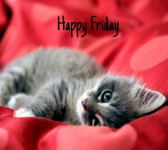 155 Best Images About Happy Friday On Pinterest