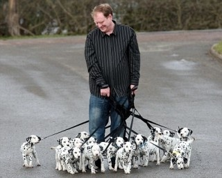 dalmatian puppies on leashes. me in the future!