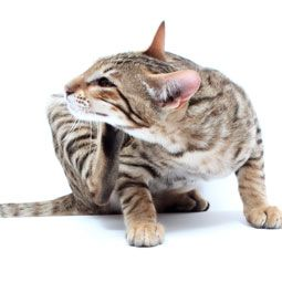 Reasons Why A Cat Stops Using A Litter Box