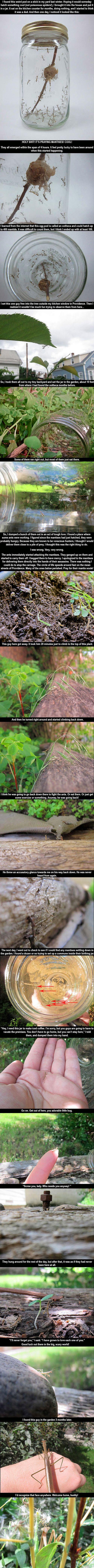 Something very interesting I found in my backyard.