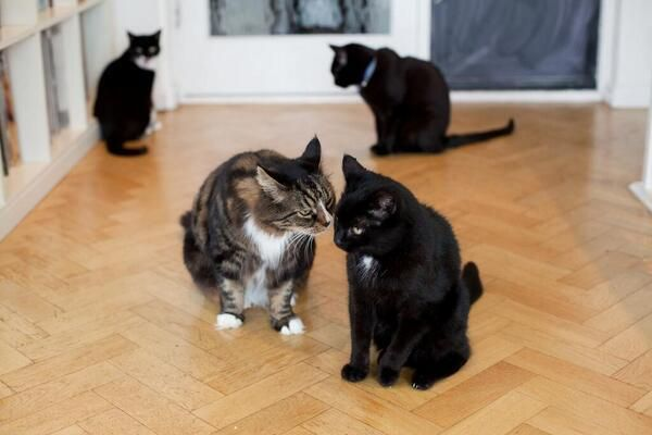 My cat is sad because my other cat just admitted to him that when he's drunk & alone he sometimes watches Babestation