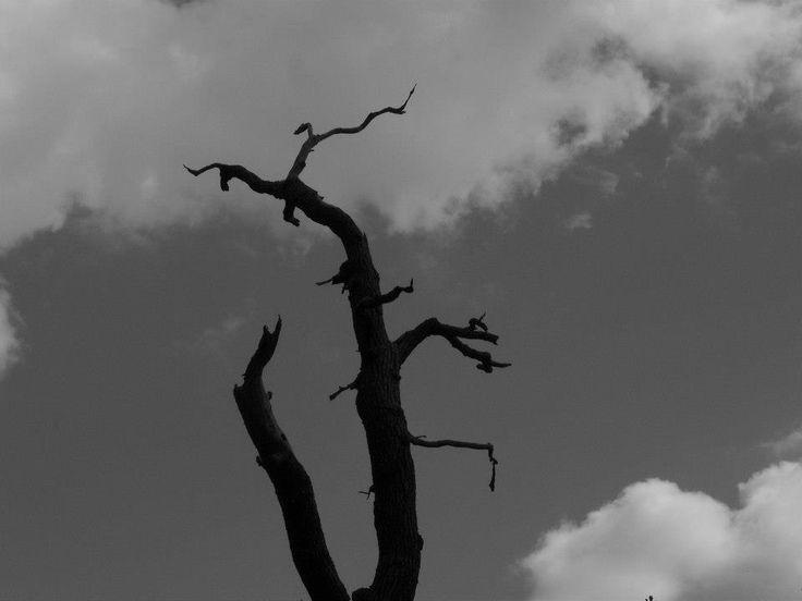 London, Leytonstone. Cool tree