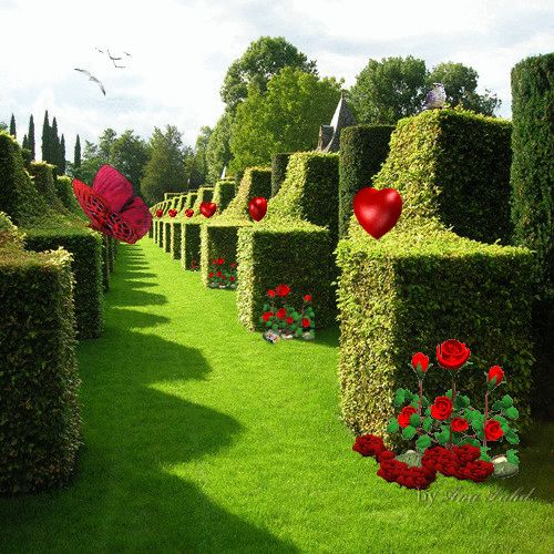 Imagem mundo: minhas flores