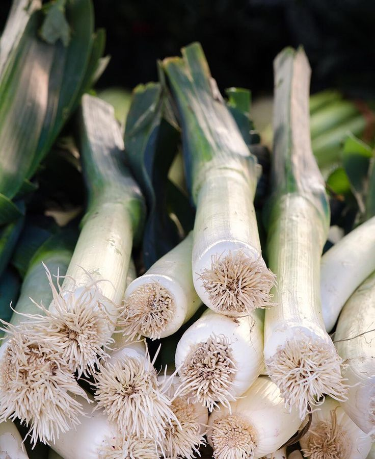 Leeks from Tutti Frutti Farms - Santa Monica Farmers Market