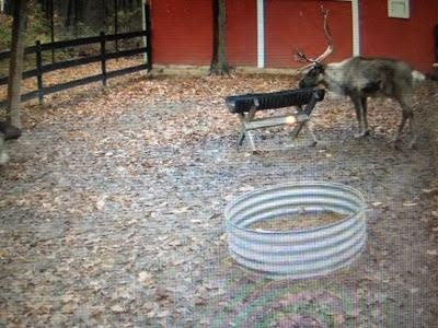 Jenna's Journey: My Kids Favorite Christmas Pin...Reindeer Cam! Watch Santa's reindeer any time you want. Starting on the 16th, Santa comes out 3x a day to feed them! Best Christmas pin!