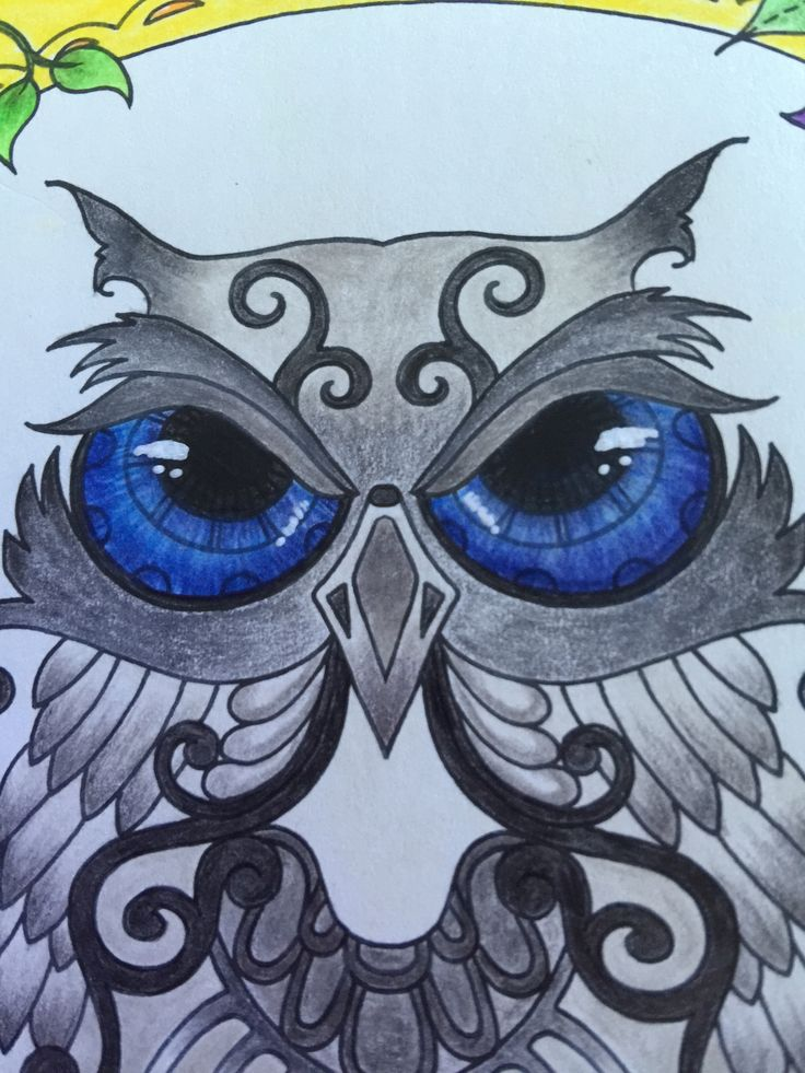 Owl - Enchanted Forest