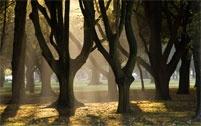 Hagley Park, early morning!