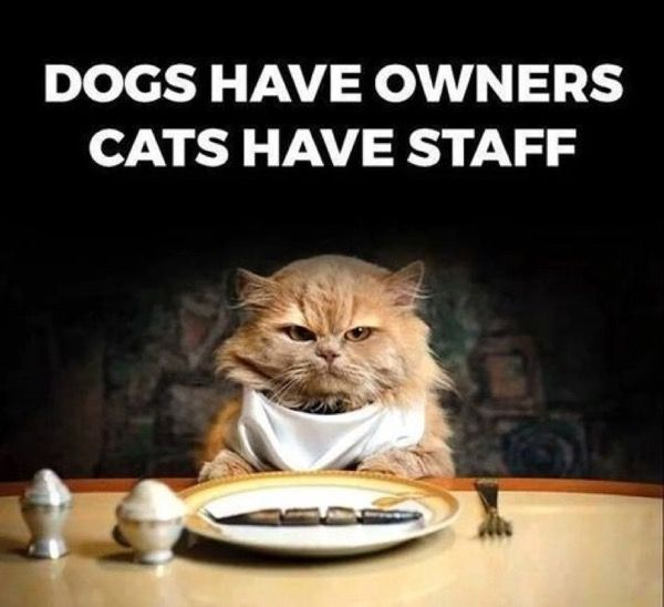 Pile o' Kittens !! – 27th June 2016