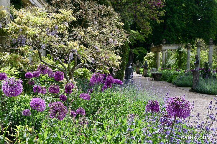 48 best CZOSNKI OZDOBNE images on Pinterest | Garden plants ...