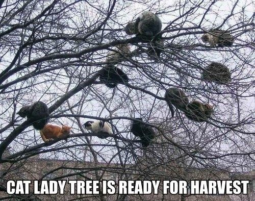 I want one of those trees! #cat #humor #cats #funny #lolcats #meme #cute #quotes =^..^= www.zazzle.com/kittypretttgifts