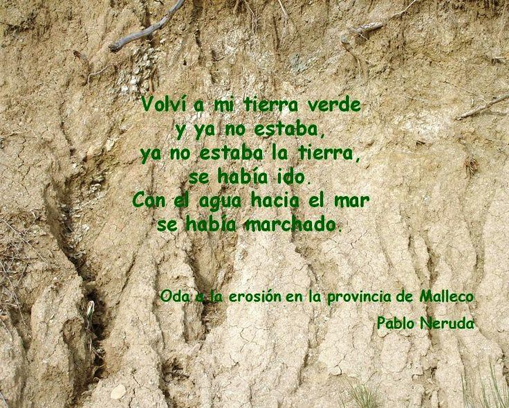 """ODA A LA EROSIÓN EN LA PROVINCIA DE MALLECO - Pablo Neruda, poeta chileno que recibió el Premio Nobel de Literatura en 1971, es considerado como uno de los mejores artistas del siglo XX. La influencia de su obra trasciende el ámbito literario. En el poema """"Oda a la erosión en la provincia de Malleco,"""" de 1956, perteneciente a nuevas Odas elementales, el narrador habla a su tierra natal sobre la desaparición de lo que existía antes."""