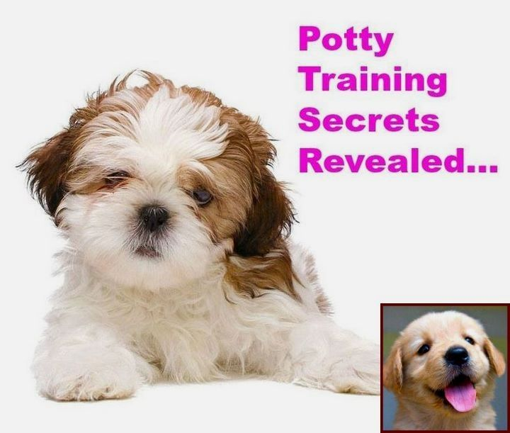 House Training A Puppy Reddit And Dog Training Courses Online