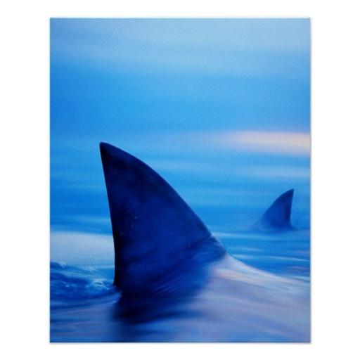 Arte De Tiburón, Regalos De