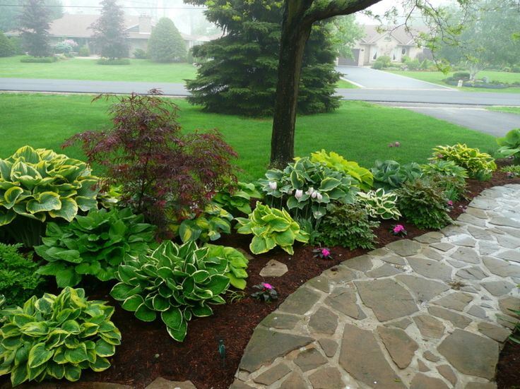 hosta sidewalk border Garden Pinterest Gardens