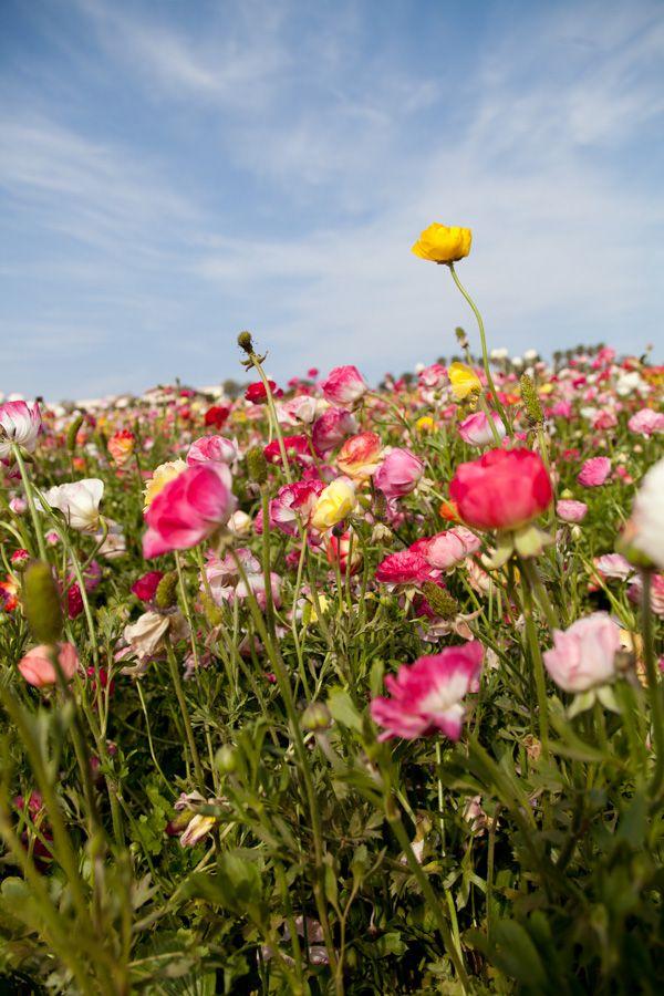 baja flowers carlsbad