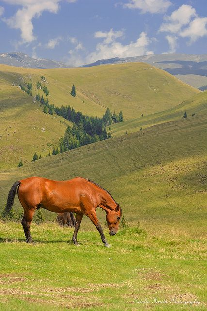 Land Of Wild Horses, Romania, www.romaniasfrieds.com